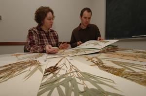 ISU botanists Lynn Clark and Jimmy Triplett study bamboo diversity and evolution.